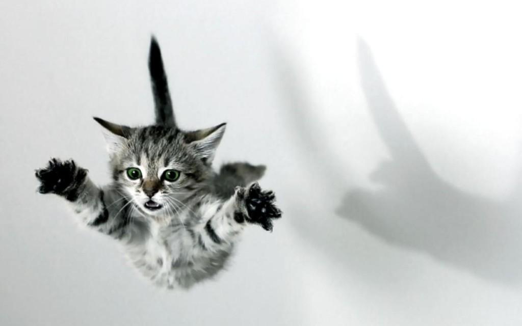 flying-kitten-1024x640